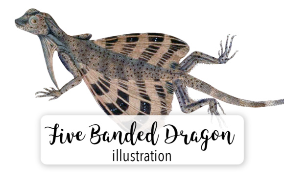 Download Free Banded Dragon Lizard Watercolor Graphic By Enliven Designs for Cricut Explore, Silhouette and other cutting machines.