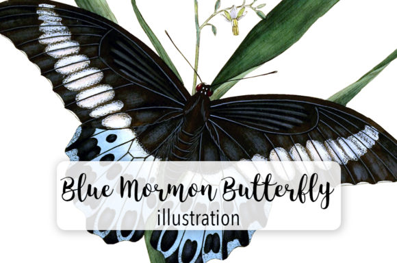 Download Free Blue Mormon And Red Spotted Butterfly Watercolor Graphic By for Cricut Explore, Silhouette and other cutting machines.
