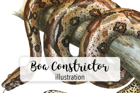 Download Free Boa Constrictor Watercolor Graphic By Enliven Designs Creative for Cricut Explore, Silhouette and other cutting machines.