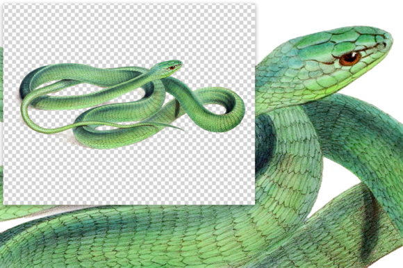 Download Free Boomslang Watercolor Graphic By Enliven Designs Creative Fabrica for Cricut Explore, Silhouette and other cutting machines.