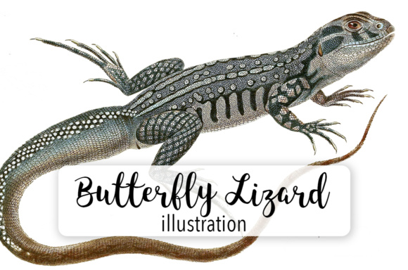 Butterfly Lizard Watercolor Graphic Illustrations By Enliven Designs