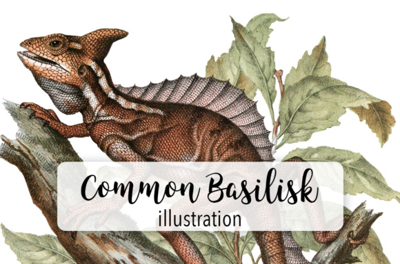 Common Lizard Basilisk Watercolor Graphic Illustrations By Enliven Designs