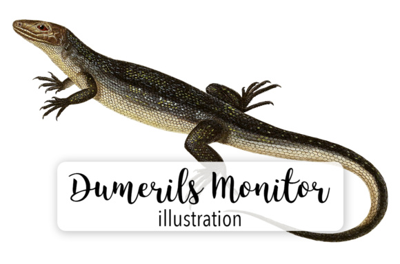 Download Free Dumeril S Monitor Watercolor Graphic By Enliven Designs for Cricut Explore, Silhouette and other cutting machines.