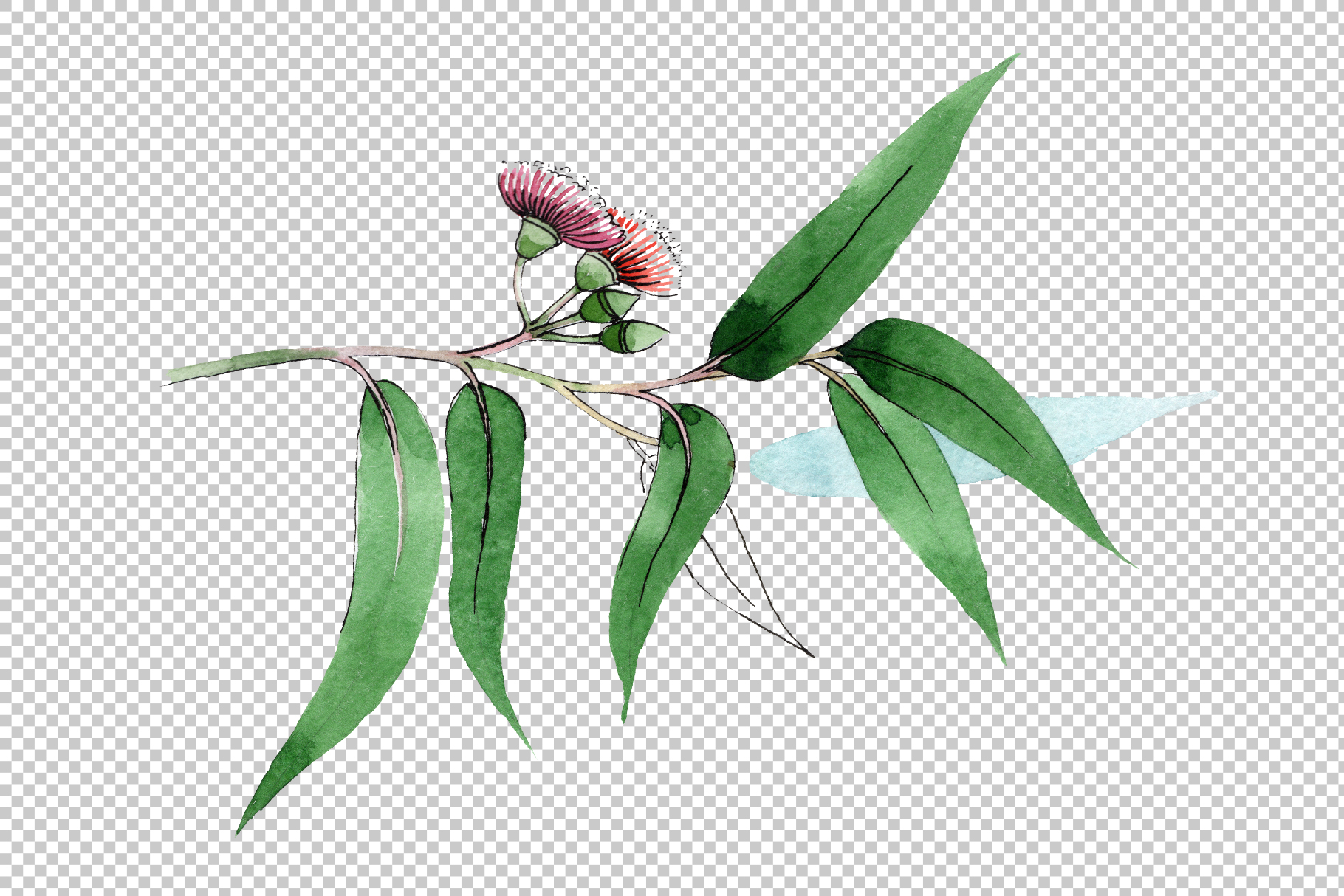 Download Free Eucalyptus Branch Watercolor Set Graphic By Mystocks Creative for Cricut Explore, Silhouette and other cutting machines.