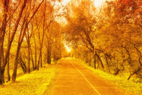 Print on Demand: Fall, Orange, Gold Landscape with Narrow Alley Road Graphic Nature By TasiPas