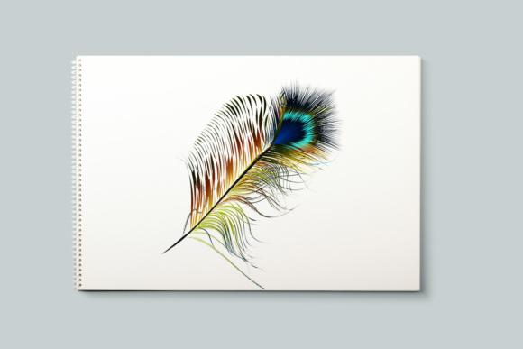 Feathers Set. Vector ClipArt