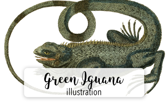Green Iguana Watercolor Graphic Illustrations By Enliven Designs