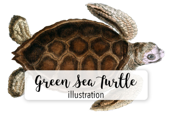 Green Sea Turtle Watercolor Graphic Illustrations By Enliven Designs