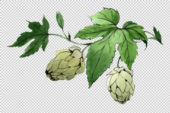 Download Free Green Watercolor Hops Graphic By Mystocks Creative Fabrica SVG Cut Files