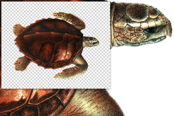Loggerhead Turtle Watercolor Graphic Illustrations By Enliven Designs - Image 2