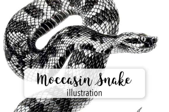 Moccasin Snake Watercolor Graphic Illustrations By Enliven Designs