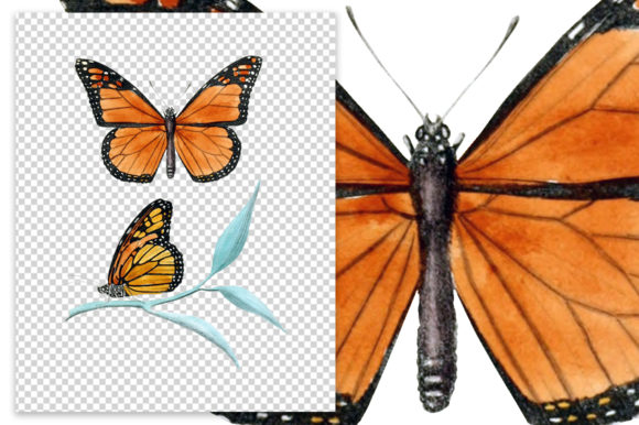 Monarch Butterfly Watercolor Graphic Download