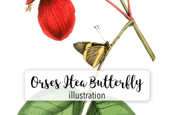 Orses Itea Butterfly Watercolor Graphic Illustrations By Enliven Designs - Image 1