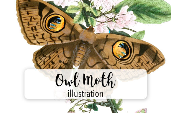 Owl Moth Butterfly Watercolor Graphic Illustrations By Enliven Designs