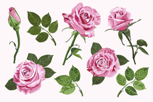 Download Free Pink Vector Roses Elements Set Isolated On The White Background SVG Cut Files