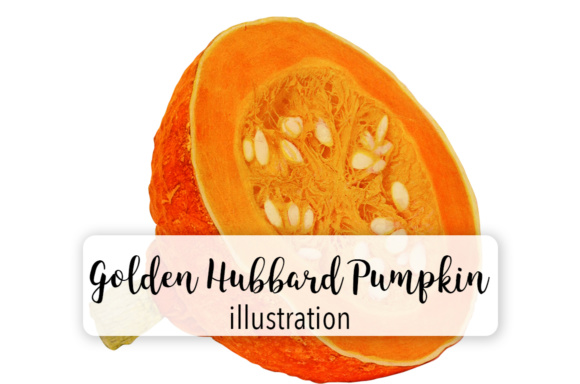 Pumpkin Golden Hubbard Graphic Graphic Illustrations By Enliven Designs