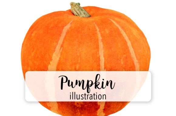 Pumpkin One Graphic Illustrations By Enliven Designs
