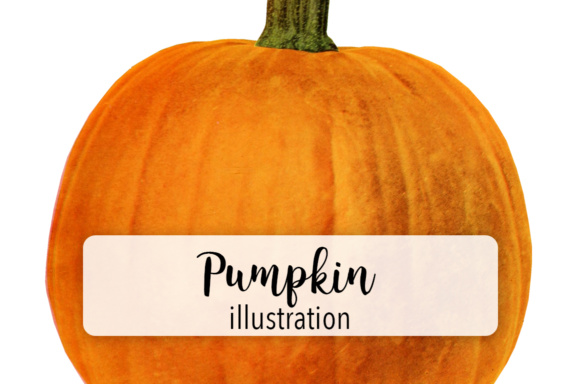 Pumpkins Three Graphic Illustrations By Enliven Designs
