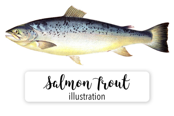 Salmon Trout Watercolor Graphic Illustrations By Enliven Designs