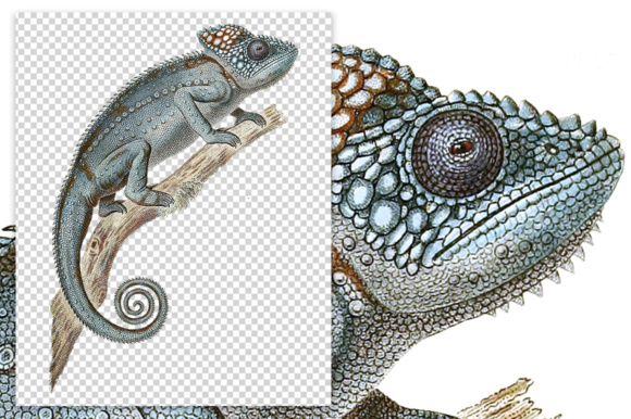 Spiny Chameleon Watercolor Graphic Illustrations By Enliven Designs - Image 2
