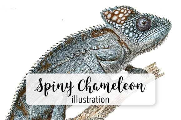 Spiny Chameleon Watercolor Gráfico Ilustraciones Por Enliven Designs