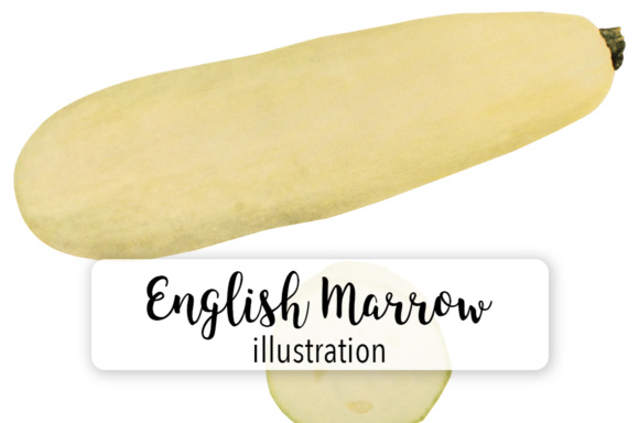 Squash - English Vegetable Marrow Graphic Illustrations By Enliven Designs