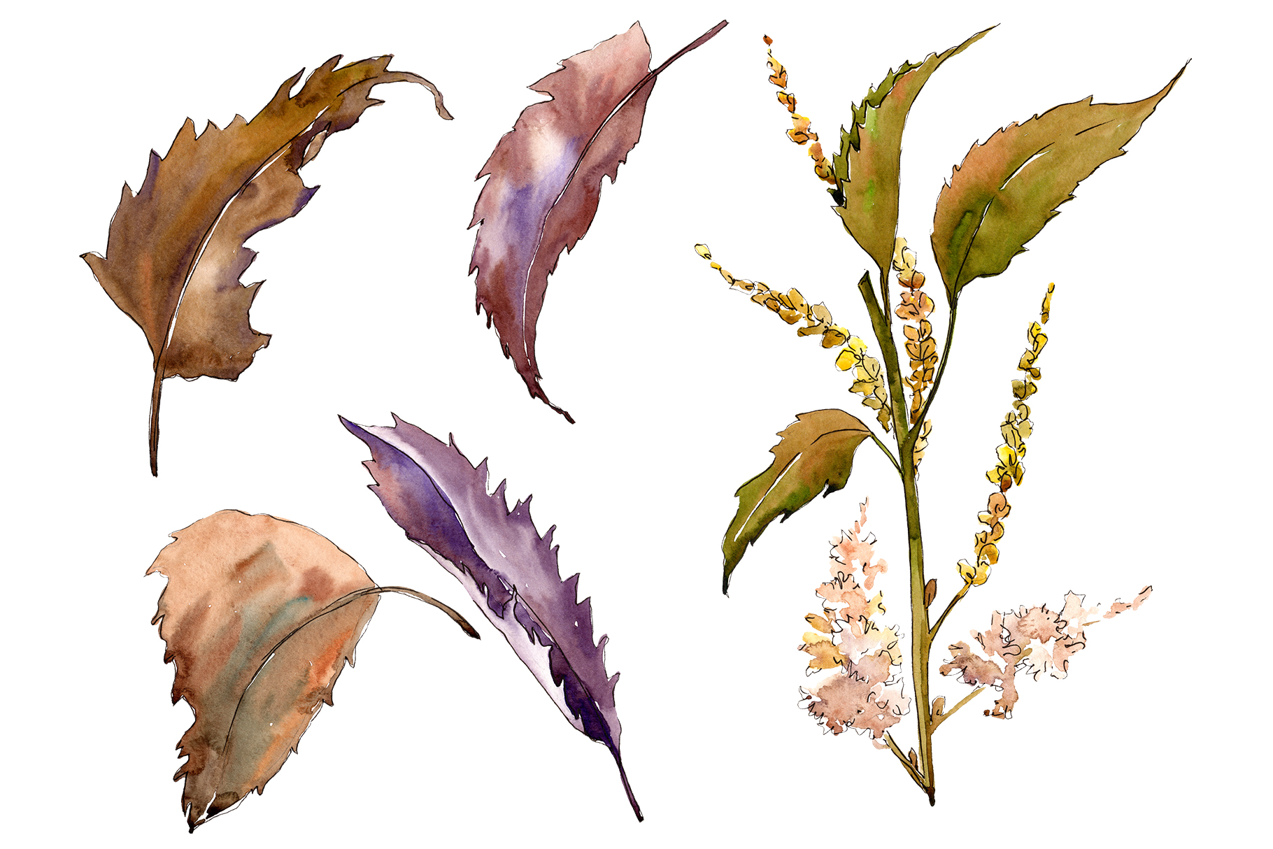 Download Free Sweet Chestnut Watercolor Leaves Set Graphic By Mystocks for Cricut Explore, Silhouette and other cutting machines.