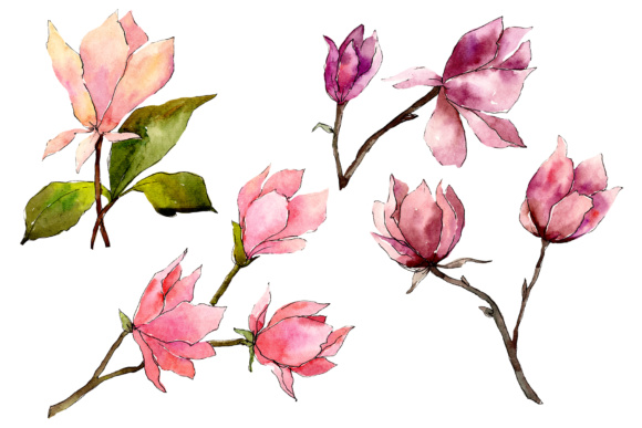 Print on Demand: Tender Pink Magnolia Watercolor Set Graphic Illustrations By MyStocks