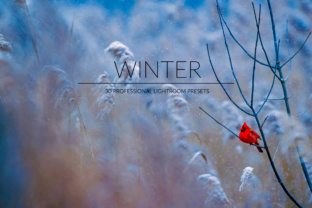 Download Free Winter Lr Presets Graphic By Pandoradreams Creative Fabrica for Cricut Explore, Silhouette and other cutting machines.