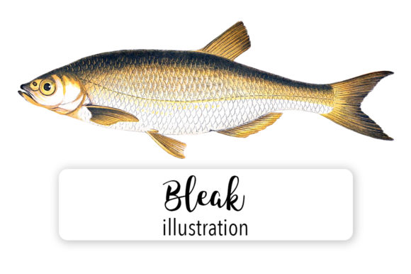 Download Free Bleak Fish Watercolor Graphic By Enliven Designs Creative Fabrica for Cricut Explore, Silhouette and other cutting machines.