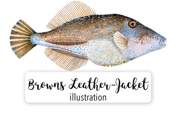 Browns Tooth Brush Leather Jacket Watercolor Graphic Illustrations By Enliven Designs