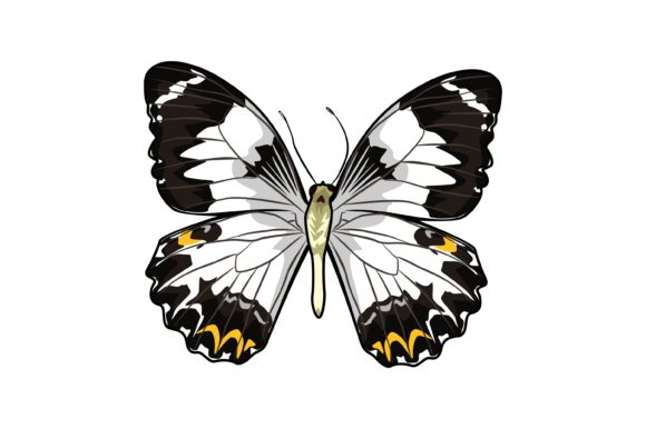 Download Free Butterfly Illustrations Graphic By Graphicrun123 Creative Fabrica for Cricut Explore, Silhouette and other cutting machines.