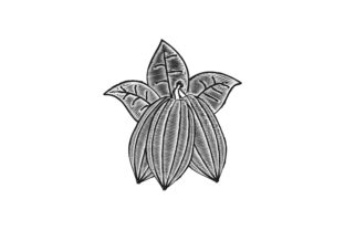 Download Free Cacao Chocolate Logo Graphic By Yahyaanasatokillah Creative for Cricut Explore, Silhouette and other cutting machines.
