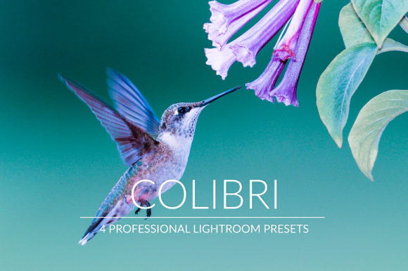 Print on Demand: Colibrì Lr Presets Graphic Add-ons By PandoraDreams