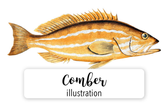 Comber Watercolor  Graphic Illustrations By Enliven Designs