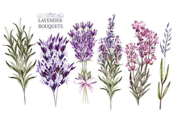 Hand Drawn Watercolor Lavender 2 Graphic Objects By Knopazyzy - Image 3