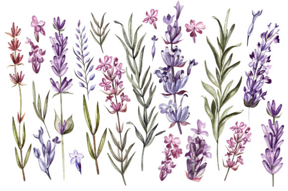 Hand Drawn Watercolor Lavender 2 Graphic Objects By Knopazyzy - Image 5