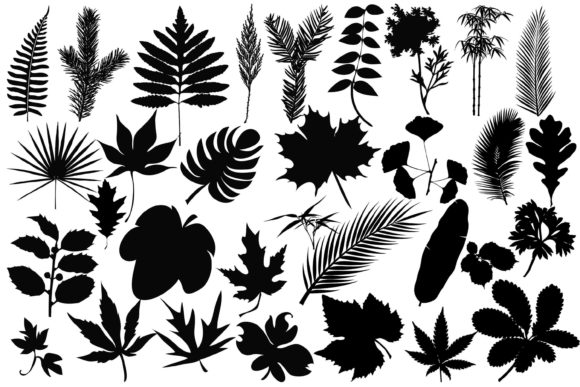 Download Free Leaves Silhouettes Graphic By Twelvepapers Creative Fabrica for Cricut Explore, Silhouette and other cutting machines.