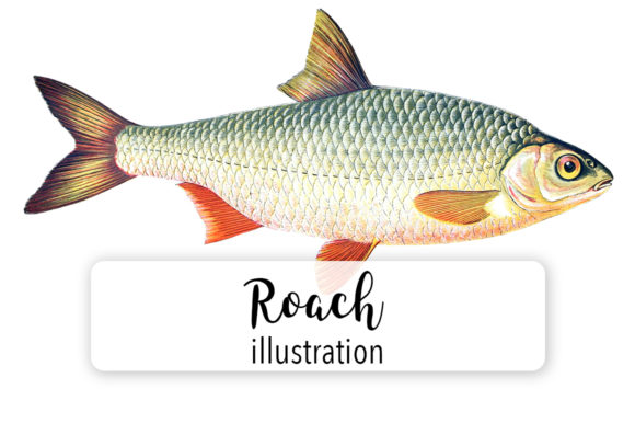 Roach Watercolor Graphic Illustrations By Enliven Designs