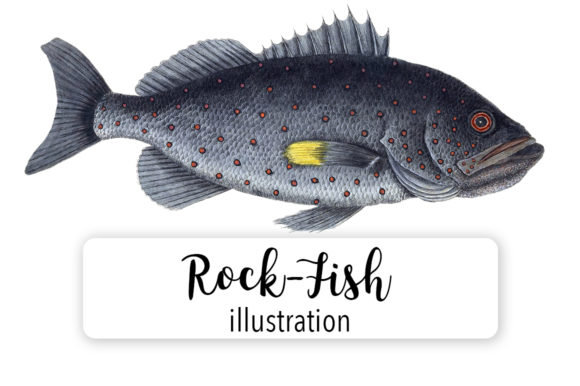 Rock Fish Watercolor Svg Graphic Illustrations By Enliven Designs