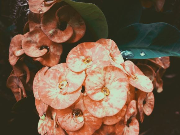 Vintage Flower Photo Graphic Nature By widyaav