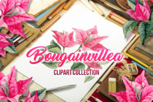 Bougainvillea Floral Clipart Graphic Illustrations By ilonitta.r