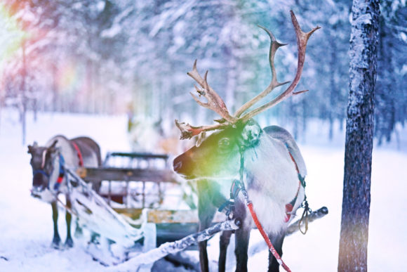 Christmas Cinematic Light Themes Overlay Graphic By 3Motional Image 11