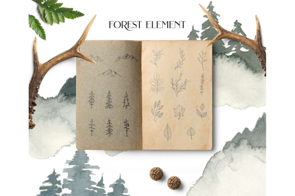 Coniferous Forest Graphic Illustrations By BilberryCreate - Image 4