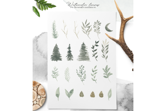 Coniferous Forest Graphic Illustrations By BilberryCreate - Image 6