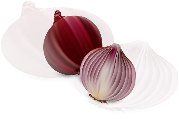 Fresh Red Onion with Gradient Mesh Graphic Illustrations By MrBrahmana