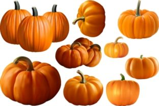 Download Free Vector Realistic Fruit Of Fresh Pumpkin Graphic By Mrbrahmana for Cricut Explore, Silhouette and other cutting machines.