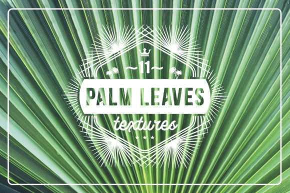 11 Palm Leaves Textures Graphic Textures By Textures - Image 1