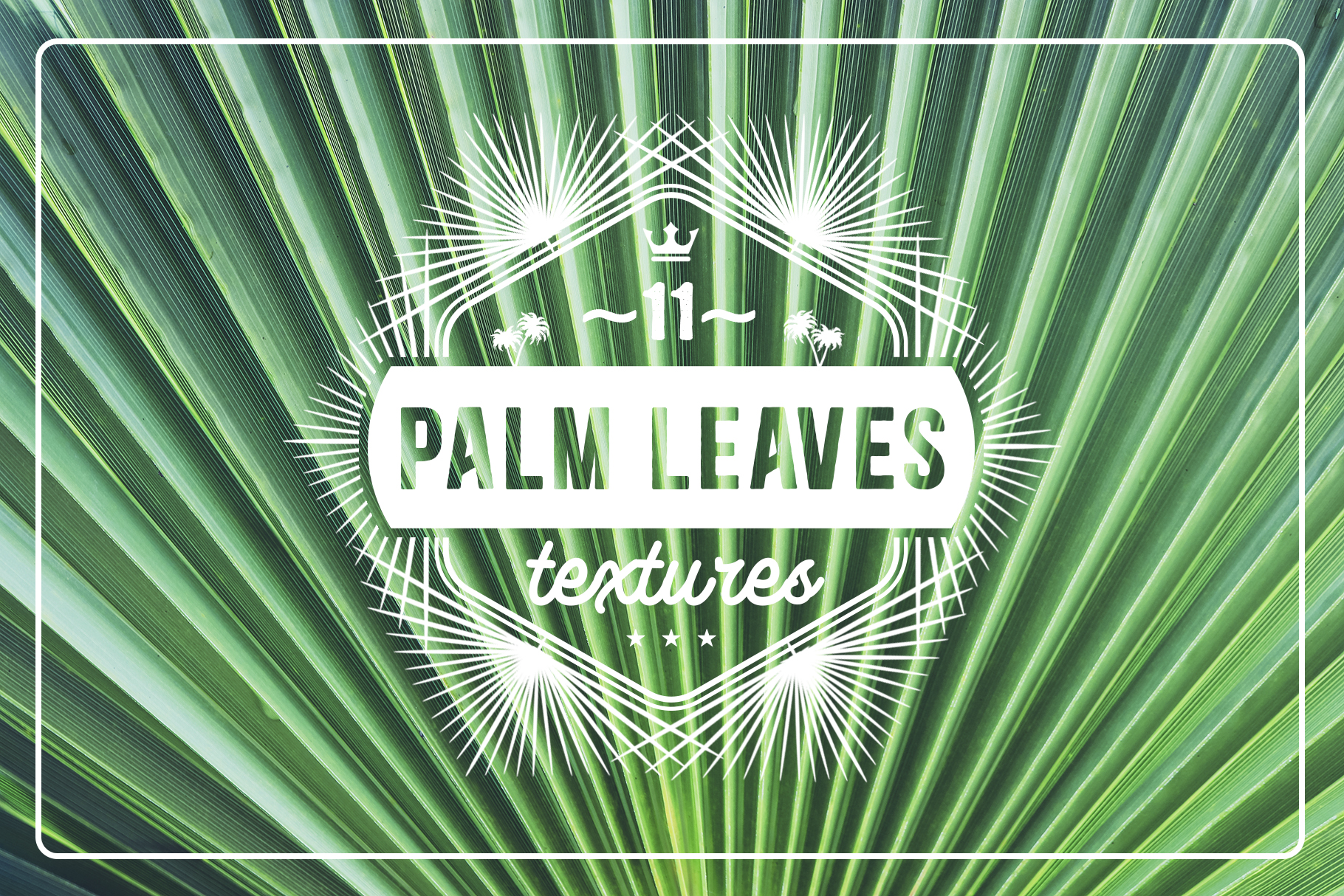 Download Free 11 Palm Leaves Textures Graphic By Textures Creative Fabrica for Cricut Explore, Silhouette and other cutting machines.