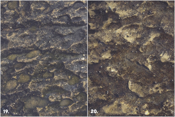 20 Weathered Sea Concrete Textures Graphic Downloadable Digital File
